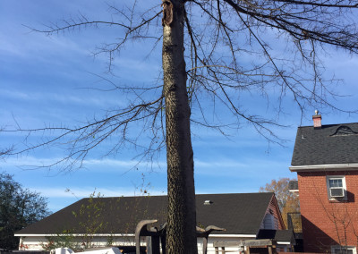 Tree Services in Pittsboro