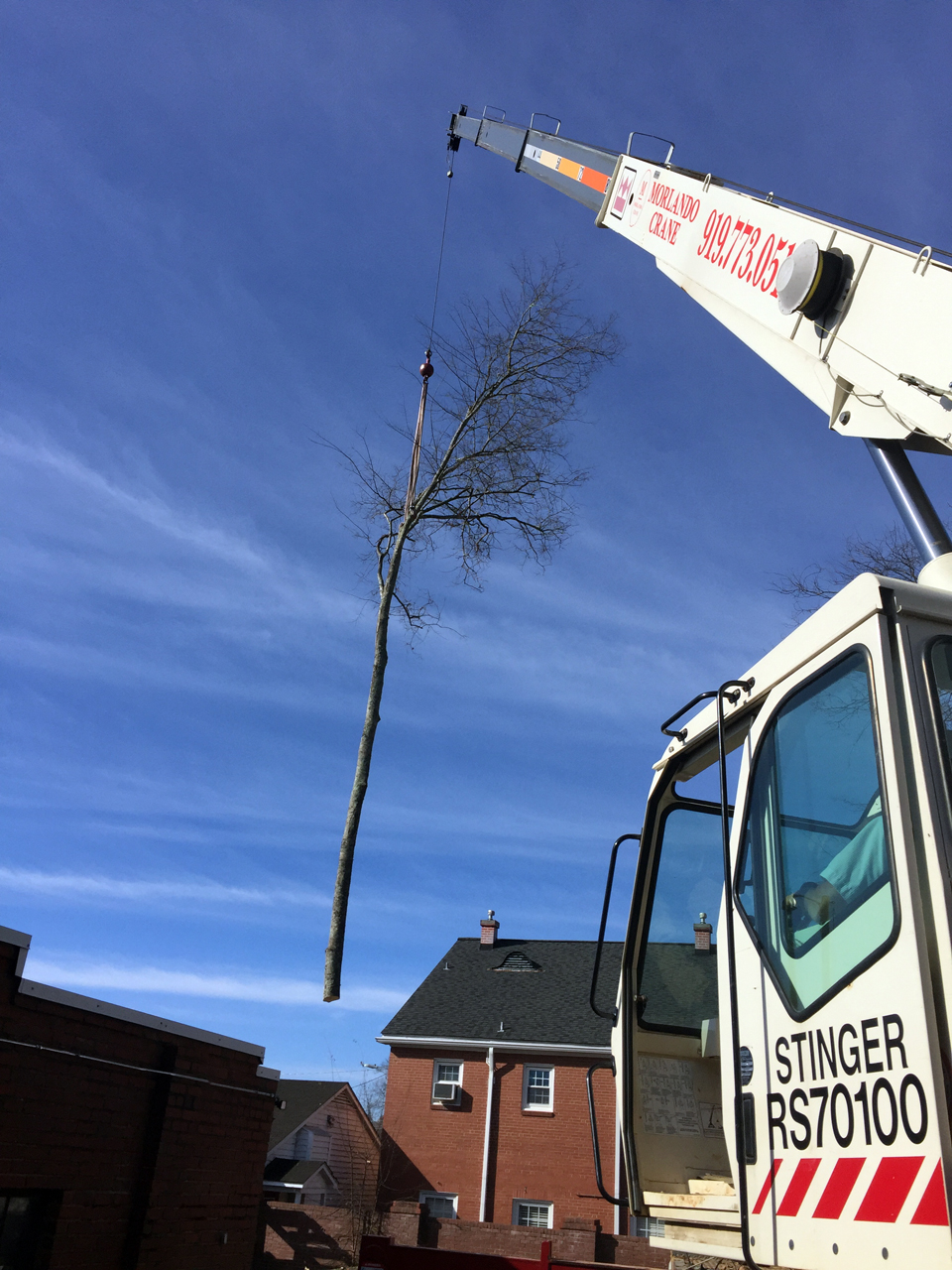 Tree Removal Services in Pittsboro using the Big Crane