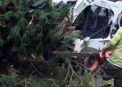 Tree_Clean_up_11
