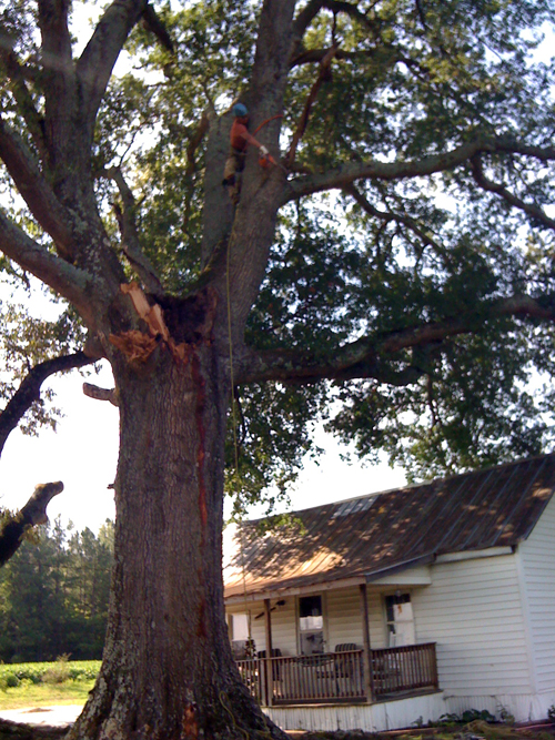 Tree Removal in Knightdale